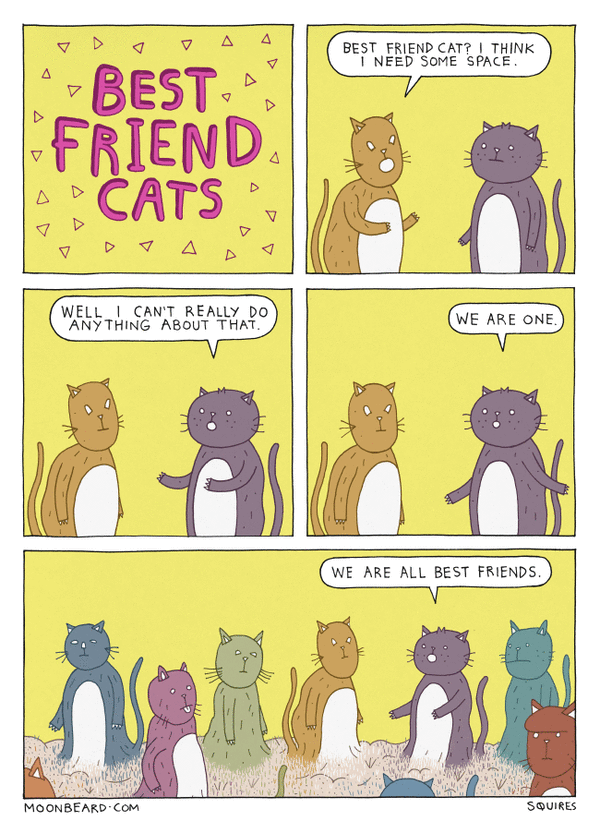 BEST FRIEND CATS Part 21