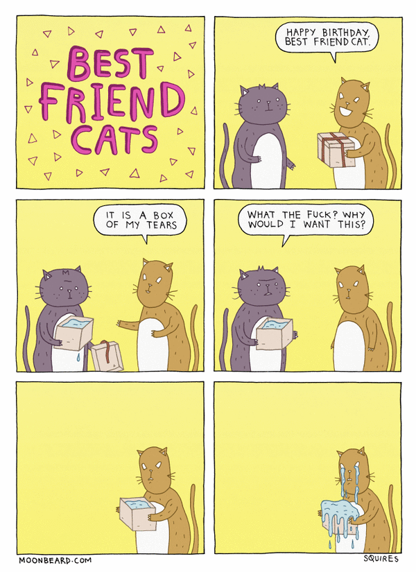 Best Friend Cats 27